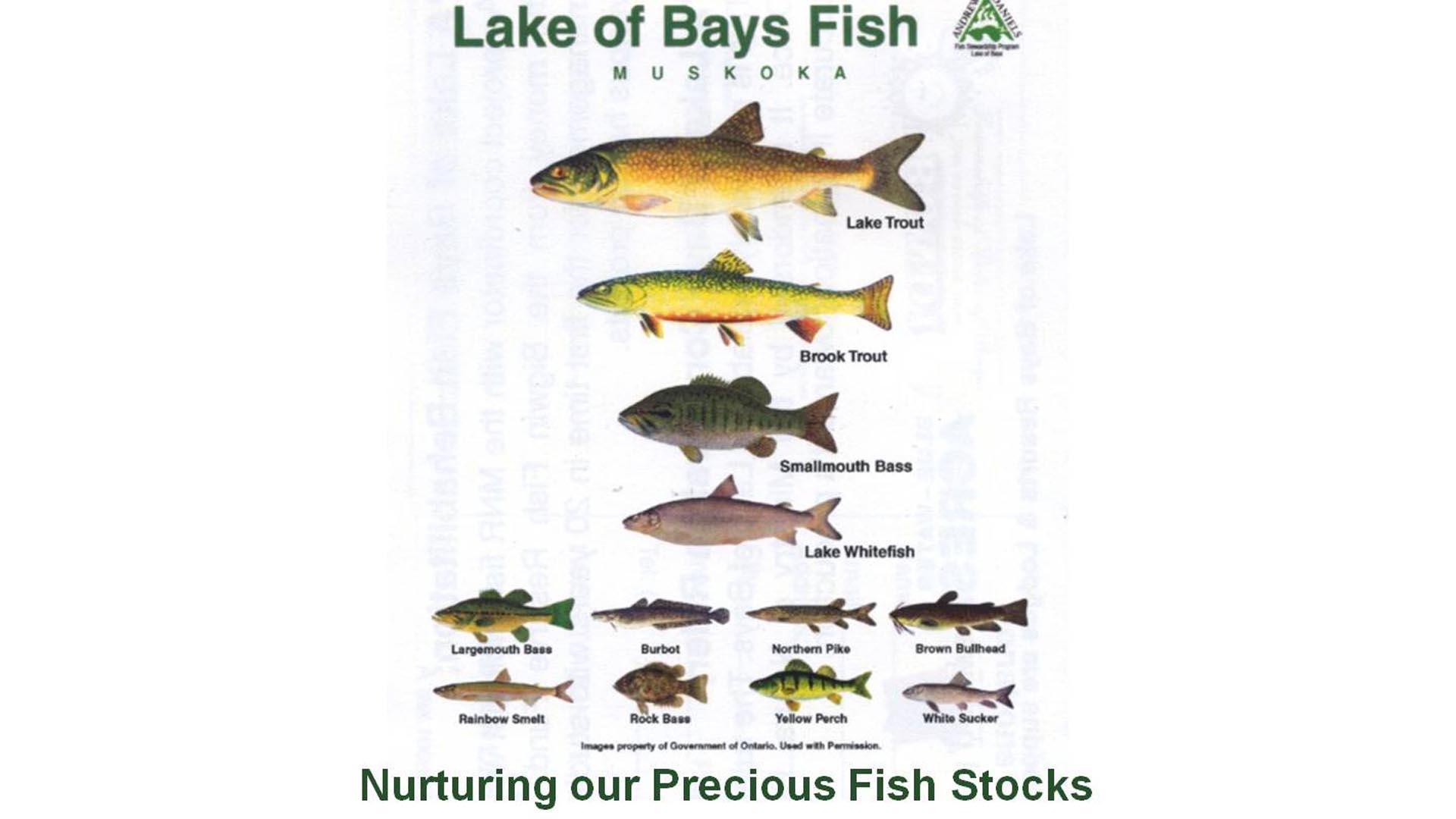 Lake of Bays fish poster.