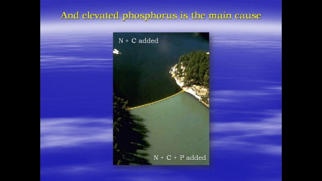 Phosphorous is the conrolling factor in eutrophication.