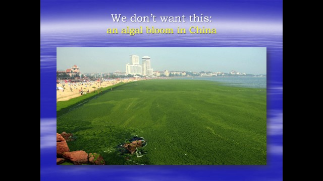 Current photo of lake in China where people swim in an algal bloom.